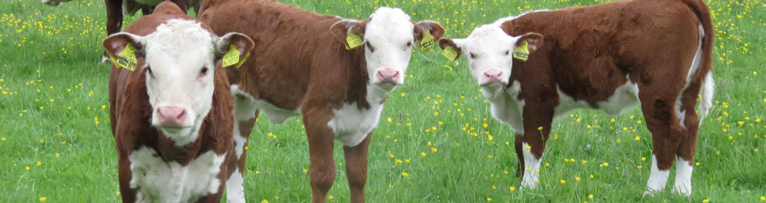 Liver and Rumen Fluke - COWS - Promoting Sustainable Control